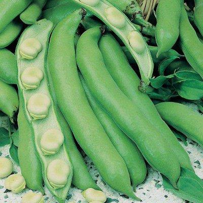 Семена от бегонии до петунии, а также семена овощей и зелени — Горох, бобы, фасоль — Семена овощей