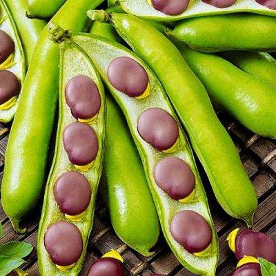 2000 видов семян для посадки! Подкормки, удобрения.     — Семена Фасоли, Бобов от 12р! — Семена овощей