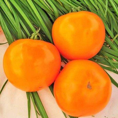 2000 видов семян для посадки! Подкормки, удобрения. — Семена Томатов.  ХИТЫ от 6р! — Семена овощей
