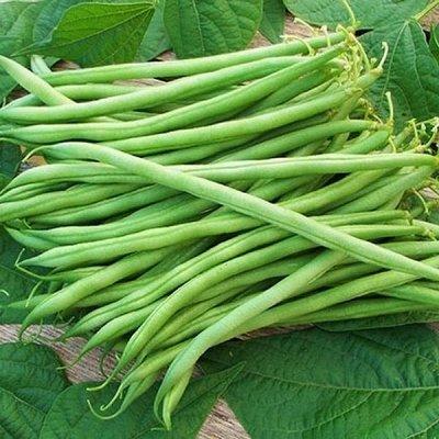 2000 видов семян для посадки! Подкормки, удобрения.   — Семена Фасоли, Бабов — Семена овощей
