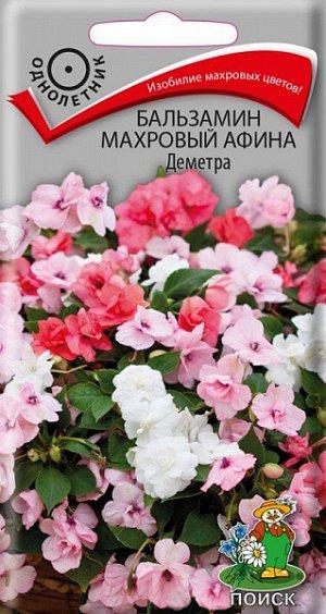 Бальзамин Махровый Афина Деметра