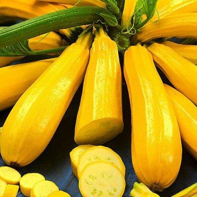 Дачный сезон! НЕ ПРОПУСТИ! Более 2000 видов семян!   — Семена Кабачков, Патиссонов — Семена овощей