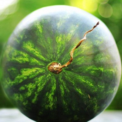 2000 видов семян для посадки! Подкормки, удобрения. — Семена бахчевых культур — Семена овощей