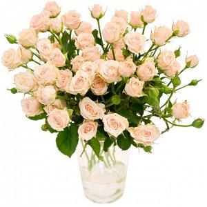 Яна Бутоны нежного светло-розового цвета с резными краями лепестков. Диаметр цветочков 4 см, густомахровые. Аромат слабый. Высота куста до 60 см, ширина - 50 см. Лист глянцевый, зеленый, крупный. Сорт