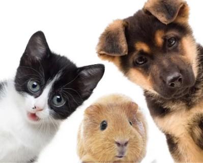 ★Чистим склад!★ Последние размеры по приятным ценам! — Для Животных — Для животных
