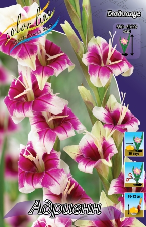 Пакетированные многолетники!олетники! — Гладиолусы — Семена цветов