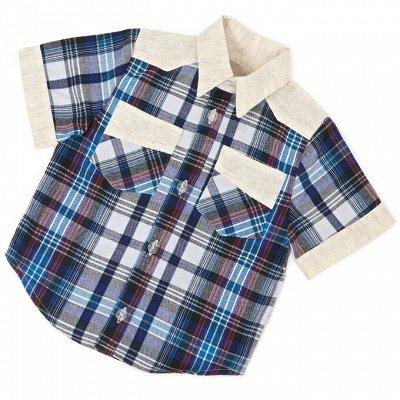 ™Моёша - Качественная детская одежда!  — Для мальчиков. Рубашки — Рубашки