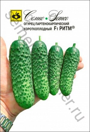 ТМ Семко Огурец партенокарпический Ритм F1 ®/ гибриды с длиной плодов 6-12 см
