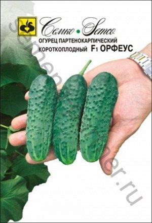 ТМ Семко Огурец партенокарпический Орфеус F1/ гибриды с длиной плодов 6-12 см
