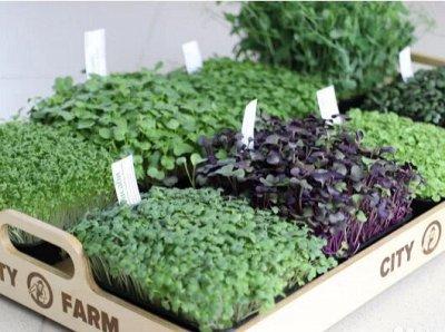 Дачный сезон! НЕ ПРОПУСТИ! Более 2000 видов семян! — Микрозелень — Семена зелени и пряных трав