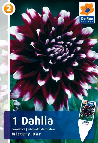 7 цветов! Шикарные пакетированные луковицы! предзаказ!  — ГЕОРГИНА_2 — Декоративноцветущие
