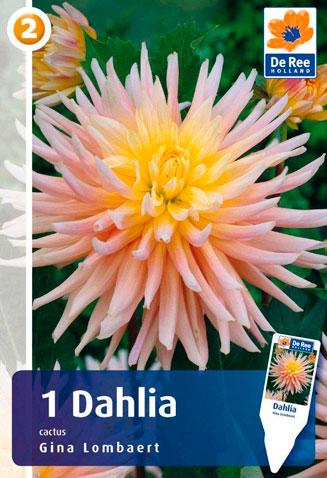 7 цветов! Шикарные пакетированные луковицы! предзаказ!  — ГЕОРГИНА_3 — Декоративноцветущие