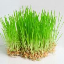 Пшеница 200 гр.