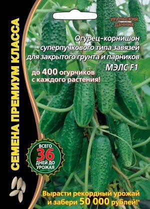Огурец Мэлс F1 ® (до 400огурчиков!супербукетный тип,ультраранний 36 дней,выделяется обилием зеленцов на плетях,массированной отдачей урожая.до 400 огурчиков с каждого растения)