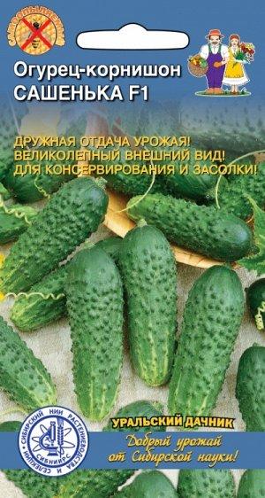 Огурец-корнишон САШЕНЬКА F1