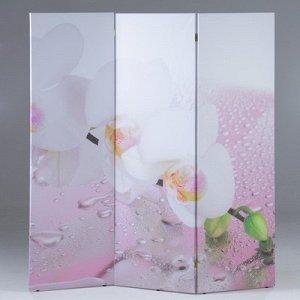 """Ширма """"Орхидея и капли воды"""", 160 ? 150 см"""