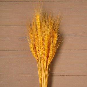 Сухой колос пшеницы, набор 50 шт, цвет желтый