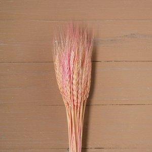 Сухой колос пшеницы, набор 50 шт, цвет розовый