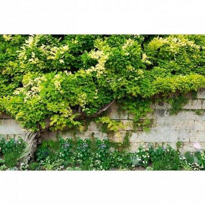 Готовимся к дачному сезону - все для сада и огорода — Фотозаборы