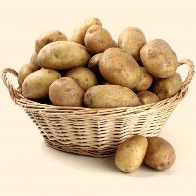 2000 видов семян для посадки! Подкормки, удобрения.   — Семена Картофеля — Семена овощей