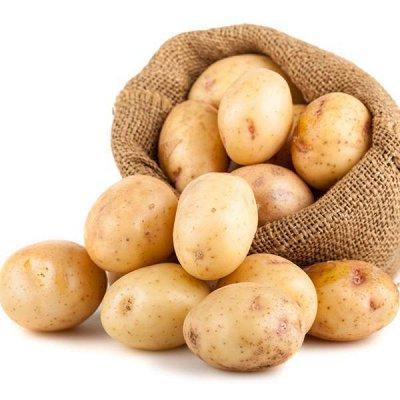 Дачный сезон! НЕ ПРОПУСТИ! Более 2000 видов семян!   — Семена Картофеля — Семена овощей
