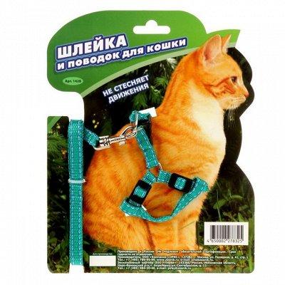 Товары для Любимцев. Уход, Содержание,Игрушки, Лакомства.    — Амуниция для кошек — Аксессуары