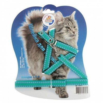 Товары для Животных.Домики, Игрушки, Одежда.   — Амуниция для кошек — Аксессуары