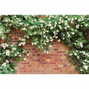 Фотобаннер, 250 ? 150 см, с фотопечатью, люверсы шаг 1 м, «Белые цветы»