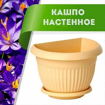 Цветоводство: для дома и дачи-40 — Кашпо настенное — Комнатные растения и уход
