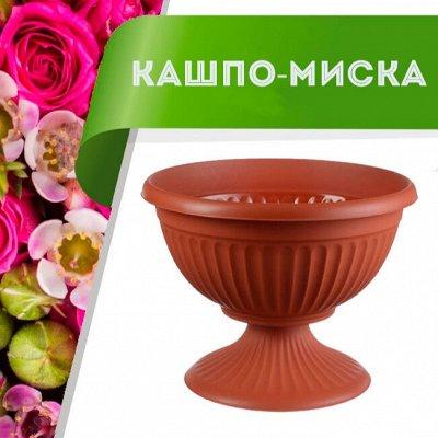 Цветоводство: для дома и дачи-40 — Кашпо-миска — Комнатные растения и уход