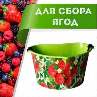 Цветоводство: для дома и дачи — Емкости для сбора ягод — Сад и огород
