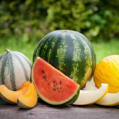 Распродажа посадочного на осень! Луковицы, семена, удобрения — Арбузы, дыни, тыквы