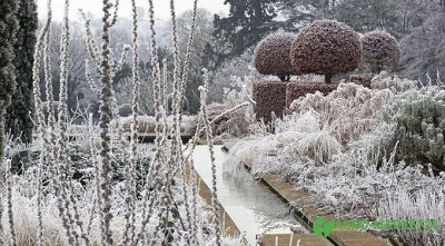 Сибирские Саженцы Плодово-Ягодные 🍏🍒 — Зимостойкость деревьев: как ее повысить  — Плодово-ягодные