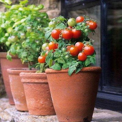 Огород круглый год (Биотехника) * 2021 — Помидоры — Семена овощей