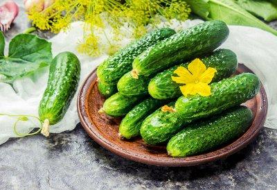 Огород круглый год (Биотехника) * 2021 — Огурцы — Семена овощей