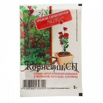 Сад и огород — Рассадный ассортимент — Сад и огород