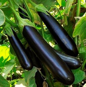 Семена Баклажан Фиолетовый длинный 0,3 г б/п с евроотв.