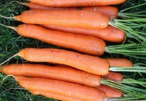 Семена Морковь Тушон 2 г б/п с евроотв.