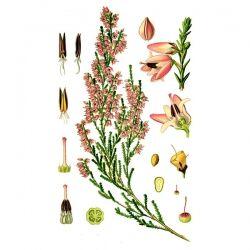 Вереск, трава и цвет, 50 гр