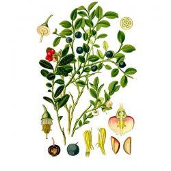 Брусника, лист, 30 гр