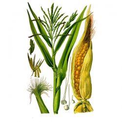 Кукурузные рыльца, 50 гр