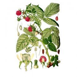 Малина лист, листья, 50 гр