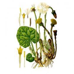 Мать-и-мачеха, листья, 50 гр