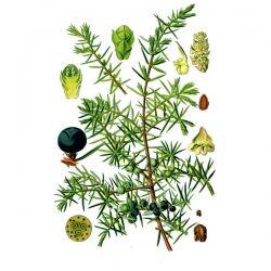 Можжевельник, плоды, 50 гр