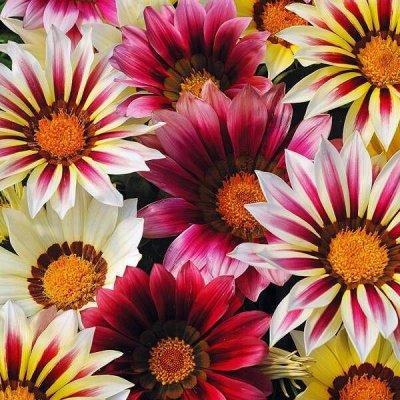 2000 видов семян для посадки!Подкормки, удобрения. — Цветы однолетние — Семена однолетние