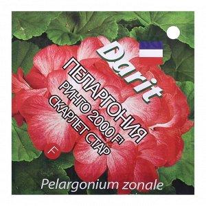 """Семена цветов Пеларгония """"Ринго 2000"""" F1 Скарлет Стар, Мн, 4 шт"""