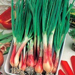 Семена Сибирской селекции — ЛУК — Семена овощей