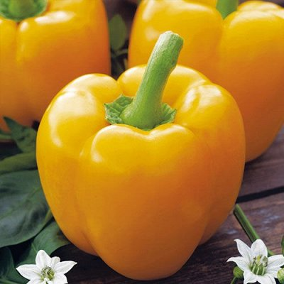 Семена Сибирской селекции — ПЕРЕЦ — Семена овощей