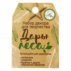 Набор природного декора «Дары леса».