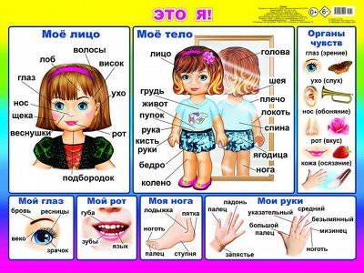Алфея. Чудесные книжки малышам от 25 рублей!     — ПЛАКАТЫ на картоне — Книги